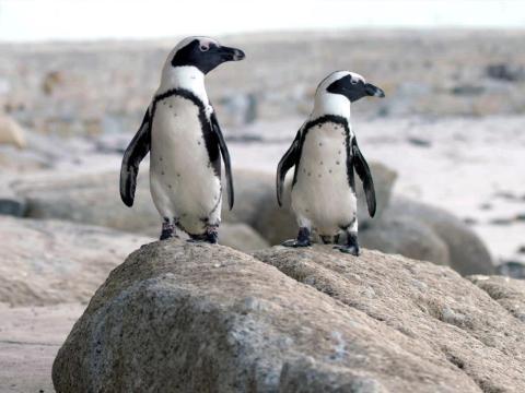La serie sigue a una colonia de pingüinos en Sudáfrica.