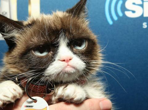 Una imagen de archivo de Grumpy Cat, el gato de los memes de internet
