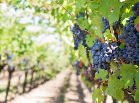 España prinicpal exportador vino