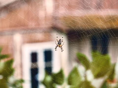 Araña en casa