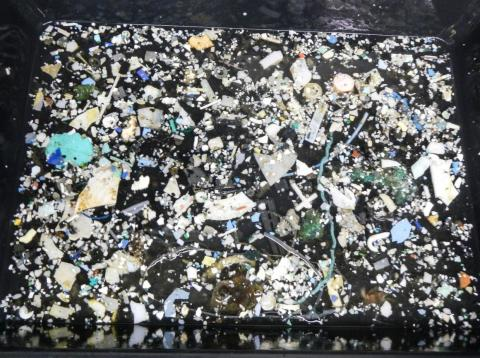 They estimated that 1.7 trillion pieces were microplastics (between 0.05 and 0.5 centimeters) but that 92% of the total plastic mass came from larger pieces.