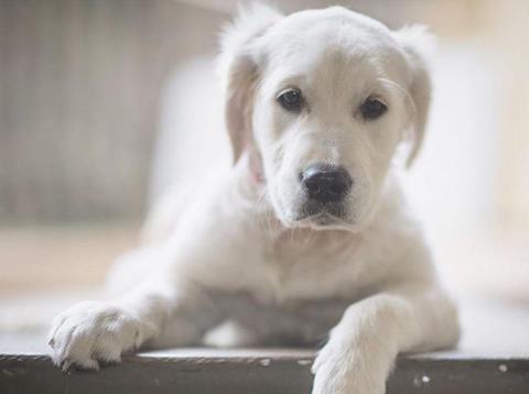 Tu perro puede comer algunos alimentos que comemos los humanos [RE]