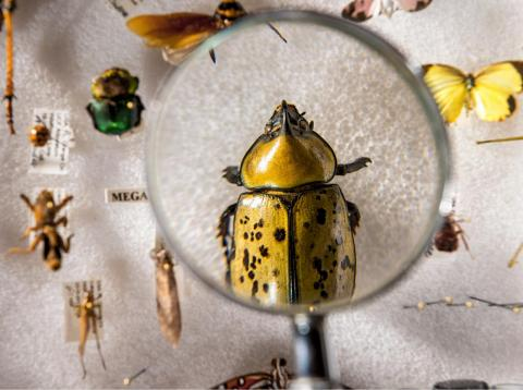 Cuarenta y uno por ciento de las especies de insectos del mundo están en riesgo, según un estudio reciente.