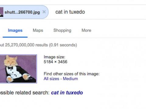 Reverse image search on Google to find that particular cat in a tuxedo.