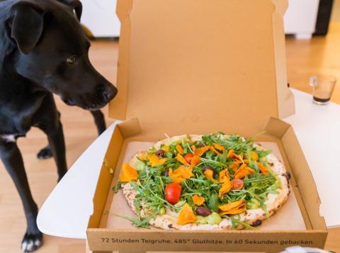 un tercio de los dueños de mascotas piensa en dar una dieta vegana a sus animales.