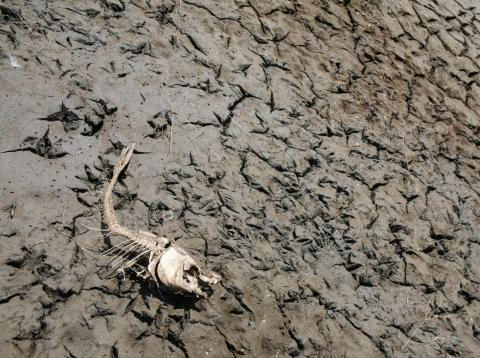 A skeleton of a fish lies forgotten on the dry bed of Lake Peñuelas outside Santiago, Chile.