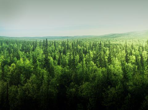 Así funciona la reforestación con drones, un LG G8 y semillas inteligentes