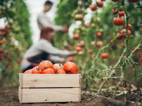 Cultivar frutas de forma sana es posible siguiendo estas pautas