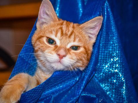 Gato en bolsa de Ikea