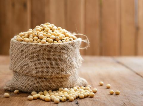 Soy beans are rich in calcium.