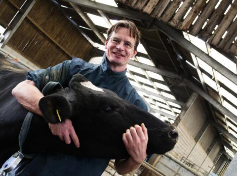 Un hombre abraza una vaca, una nueva forma de combatir el estrés
