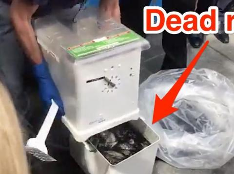 Brooklyn Borough President Eric Adams displayed the Ekomille rat trap at a press conference on September 6, 2019.