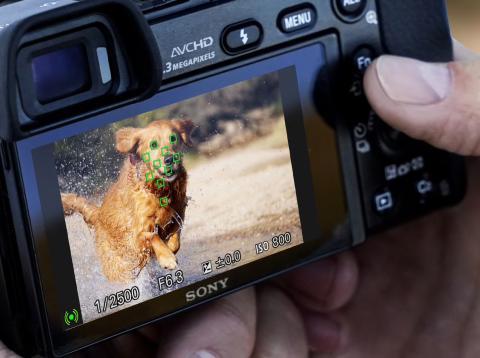 Cámara Sony A6000 enfocando a un perro