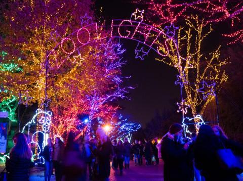 La puerta luminosa ZooLights de Chicago celebra este año su 25º aniversario.