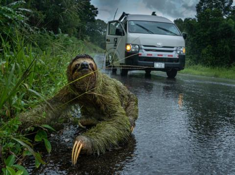 """People and Nature category winner: """"Why did the sloth cross the road?"""" by Andrew Whitworth"""