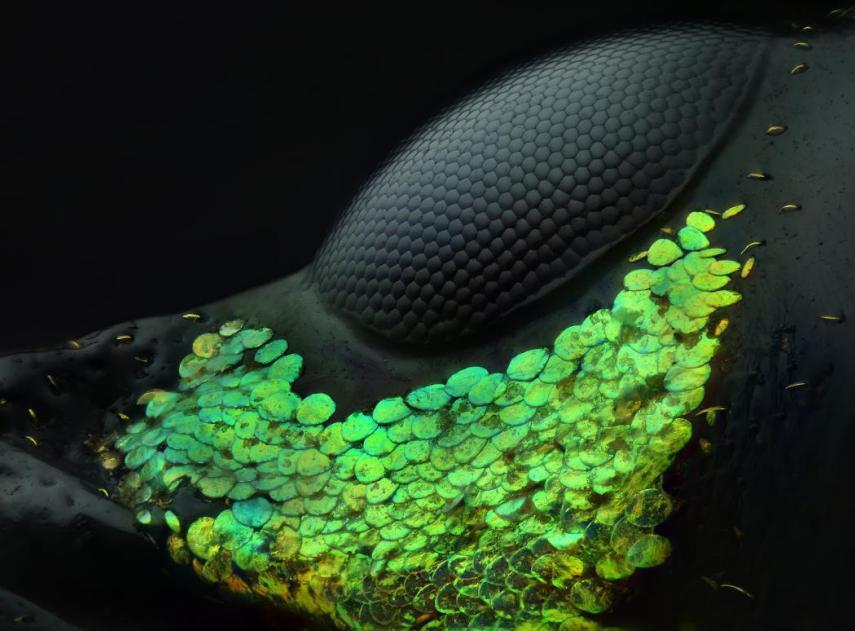 Un universo en miniatura existe más allá de nuestra vista: estas fotos muestran sus hermosos e impresionantes detalles