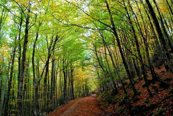 Parque Natural Saja-Besaya.