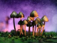 Setas alucinógenas