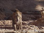 """Scar delivers some different lines in the new """"Lion King"""" movie."""