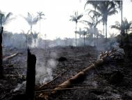 The Amazon rainforest is burning at a record rate: The Brazilian Amazon has experienced more than 74,000 fires this year, whereas last year's total was around 40,000.