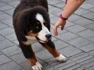 Sometimes a dog may dislike you or feel uncomfortable around you.