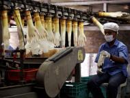 fabricante de guantes de plástico