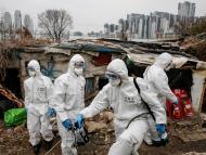 Soldados surcoreanos desinfectando los barrios pobres de Corea del Sur.