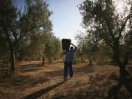 Olivo, campo, agricultura
