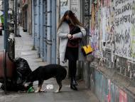 Perros callejeros coronavirus