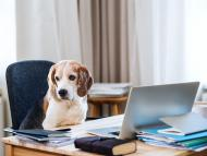 Dogs are spending more time with their owners during the coronavirus pandemic.
