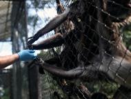 Unos monos en un zoo de Colombia.