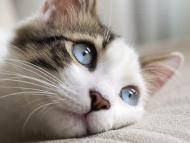 New research suggests that cats may be 'silent intermediate' hosts of COVID-19