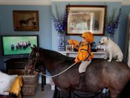 Mascotas viendo la tele