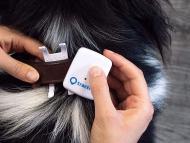 Este localizador GPS para mascotas rastrea a tu perro casa 3 segundos