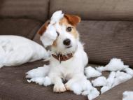 Un perro encima de un sofá