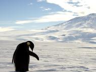 Un pingüino en la Antártida