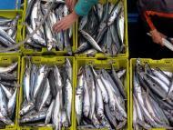 Pescadores descargan sus capturas en la lonja de san Sebastián