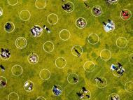 coronavirus park circles
