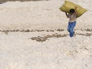 Fábricas de algodón