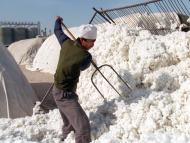 Fábricas de algodon de  Xinjiang