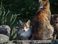 Así es la Isla de los gatos, en Japón, con 8 gatos por cada persona