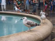 Pájaros en una fuente