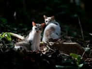 """Cats live on Furtada Island, popularly known as """"Island of the Cats,"""" in Mangaratiba, Brazil, Tuesday, Oct. 13, 2020."""