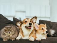 Perros y gato en el sofá