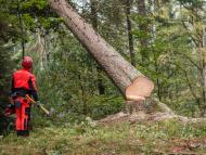 Deforestación en Europa