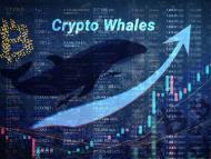 Gráfico con una ballena y el símbolo de bitcoin.
