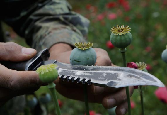 Un soldado corta un bulbo de amapola para extraerle la savia, que se utiliza para elaborar opio, durante una operación militar para destruir un campo en el municipio de Coyuca de Catalán en Guerrero (México) el 18 de abril de 2017.
