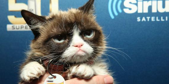 Grumpy Cat en febrero de 2016.