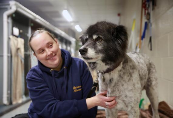 mujer cuida a un perro