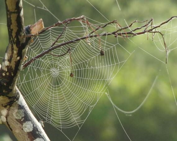 Las multinacionales utilizan una red muy amplia y complicada de filiales.